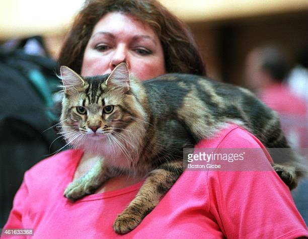 At the International Cat Show at the Park Plaza Castle Claudia Hasay, from Long Island, N.Y., sits at her table with her Maine Coon cat resting on...