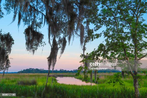 at the marsh - spanish moss stock pictures, royalty-free photos & images