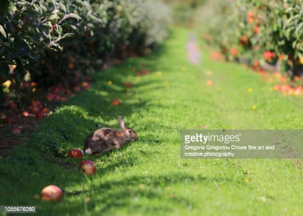 at the orchard - gregoria gregoriou crowe fine art and creative photography - fotografias e filmes do acervo