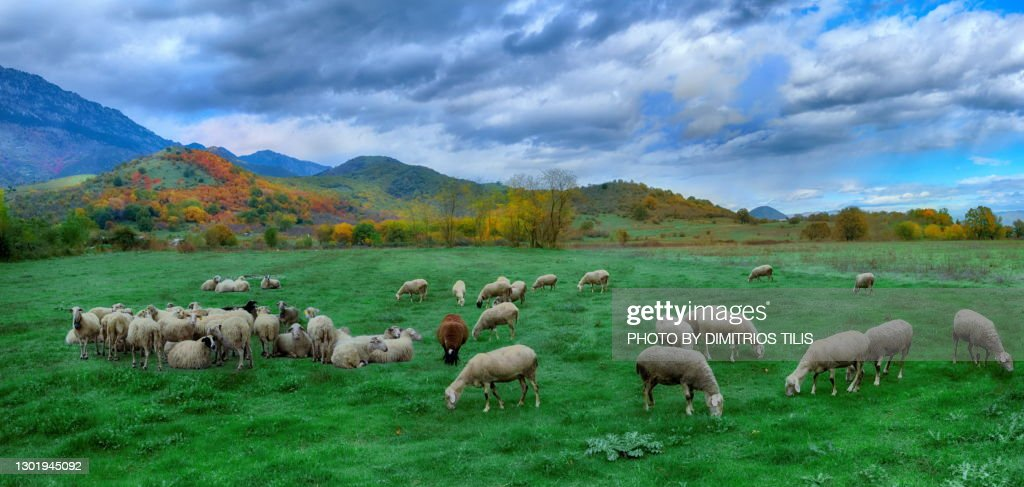 At the pastures of Prinos panorama 3 : Stock Photo