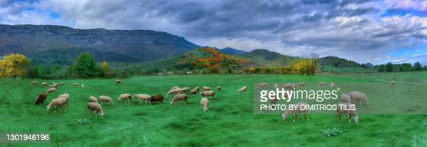 at the pastures of prinos panorama - dimitrios tilis stock pictures, royalty-free photos & images