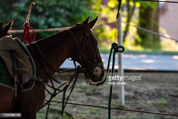 at the pony lines - polo stock pictures, royalty-free photos & images
