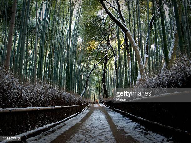 At the snowy path of bamboo near Arashiyama