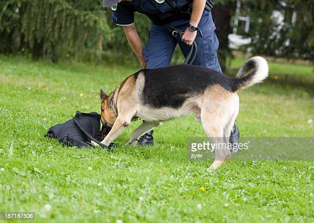 k-9 at work - police dog stock photos and pictures