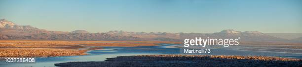 atacama desert - andes altiplano - arid climate  - dirty - andes hills  - valleys- chaxa lagoon - wildlife refuge - water bird stock pictures, royalty-free photos & images