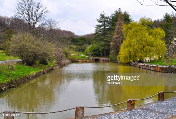 ataturk arboretum - arboreto foto e immagini stock