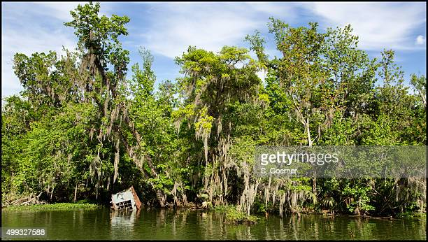 Atchafalaya Basin - Louisiana