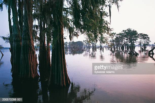 Atchafalaya River, Atchafalaya Basin, Louisiana, USA
