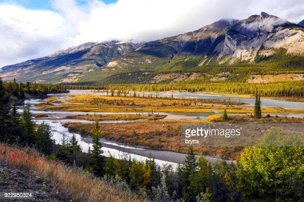 athabasca river with grazing elk in jasper national park,alberta,canada - alberta stock pictures, royalty-free photos & images