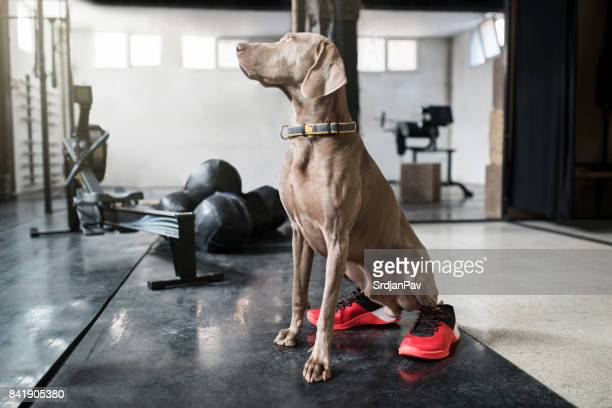 athletic dog - basketball shoe stock photos and pictures