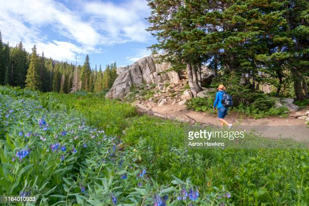 athletic female model on mountain hiking trail to lake mary in the middle of summer - utah stock pictures, royalty-free photos & images