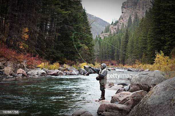 a athletic man fly fishing stands on the banks a river surrounded with the fall colors in montana. - fly casting stockfoto's en -beelden