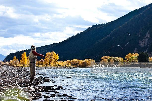 a athletic man fly fishing stands on the banks of a river with the fall colors and snowy mountains behind him in montana. - bozeman stock pictures, royalty-free photos & images