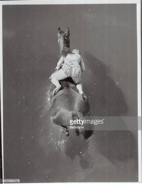 Swan dives are nothing compared to the horse dives of 'Dimah' just about to hit the water with rider Ann Eastham after a 75foot drop from a lofty...