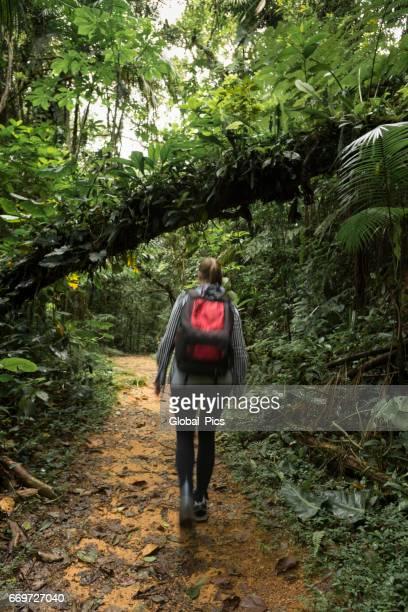 Atlantic Forest - Brazil