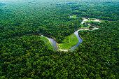 Atlantic Forest in Brazil, Mata Atlantica