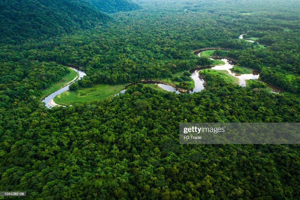 Atlantic Forest in Brazil, Mata Atlantica : Stock Photo