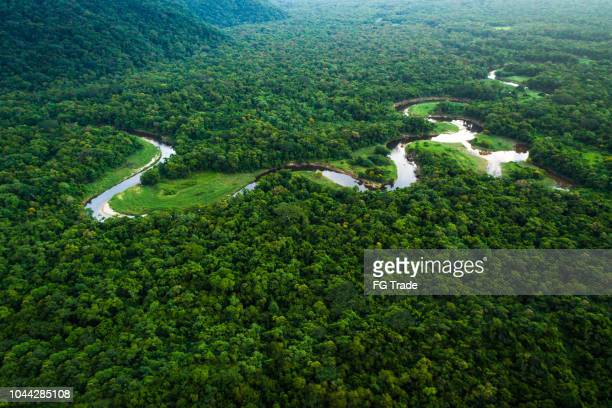 atlantic forest in brazil, mata atlantica - nature reserve stock pictures, royalty-free photos & images