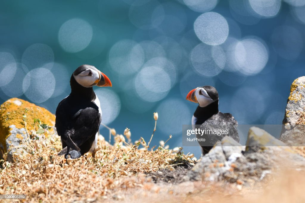 The Saltee Islands - the Most Famous Bird Sanctuary in Ireland