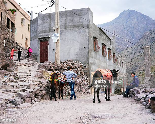Atlas donkeys
