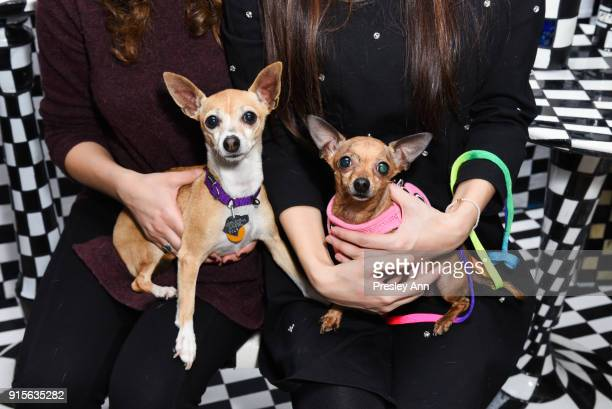 Atmosphere at the Leesa Rowland's Animal Ashram PopUp Penthouse on February 7 2018 in New York City