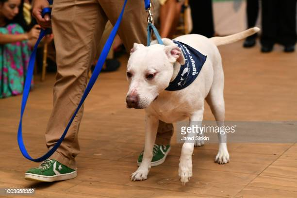 Pamela O'Connor attends the Southampton Animal Shelter Foundation's Unconditional Love Gala at a Private Residence on July 21 2018 in Southampton New...