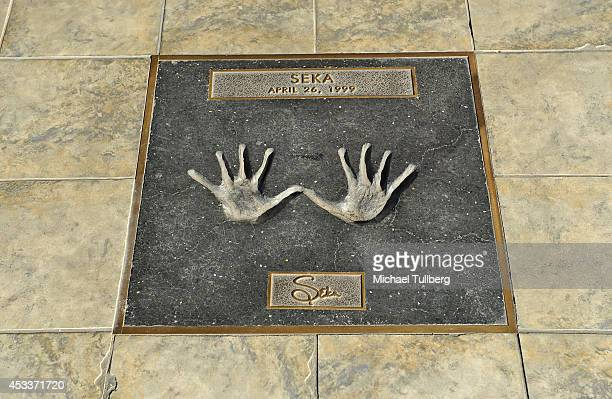 Atmosphere shot of adult star Seka's handprints at the Adult Walk Of Fame at Hustler Hollywood on the 'Sunset Strip' on August 8 2014 in Hollywood...