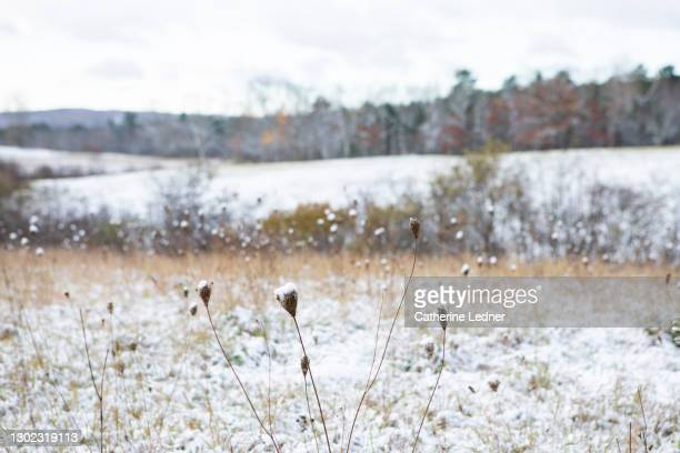 atmospheric landscape with fresh snow with snowy fields in the distance. - catherine ledner stock pictures, royalty-free photos & images