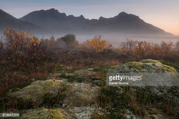 Atmospheric natural landscape on Lofoten islands during foggy sunrise