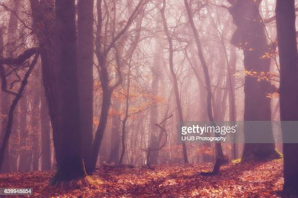 Atmospheric scene in the woods on a misty morning