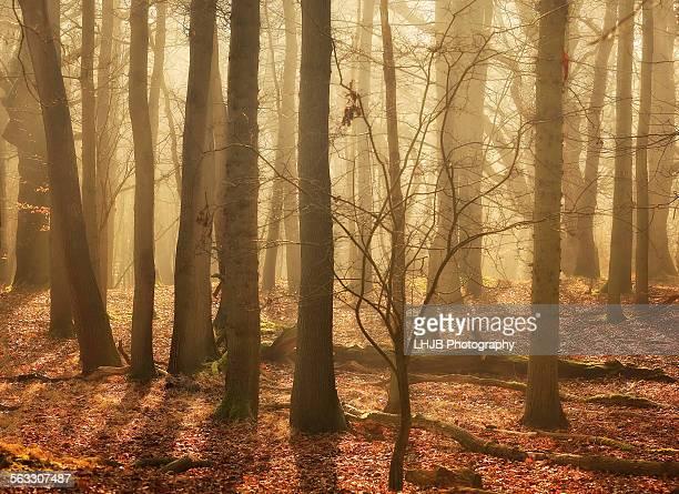 Atmospheric scene in the woods