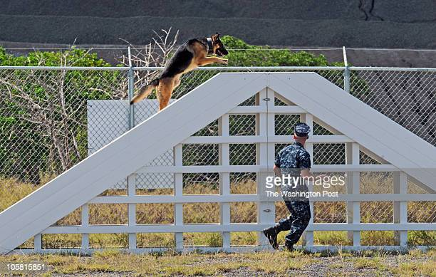 Atos a 4yearold German Shepherd military working dog trains in a new training and housing facility as we look at the high price tags on building...