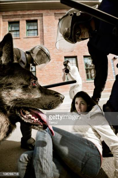 attack - dog cruelty stock pictures, royalty-free photos & images