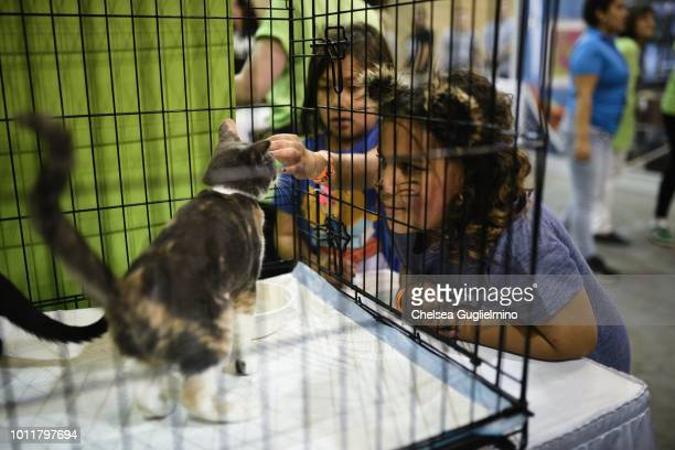 Attendees play with cats in the adoption center at CatCon Worldwide 2018 at Pasadena Convention Center on August 5 2018 in Pasadena California