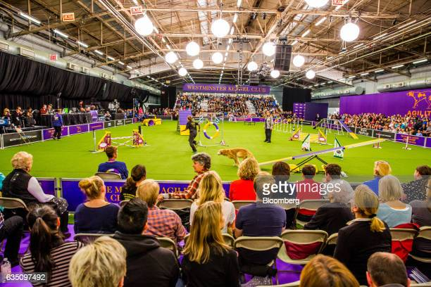 Attendees watch as a dog participates in the agility competition during the annual Meet the Breed event ahead of the 141st Westminster Kennel Club...
