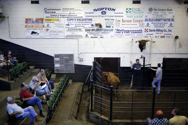 TN: Kentucky-Tennessee Livestock Market Auction As USDA Increases 2020 Beef Expectations