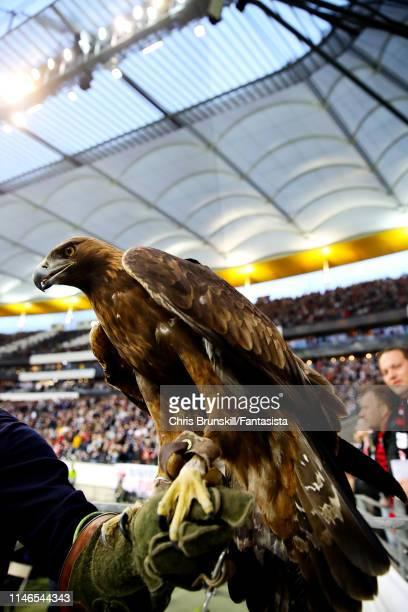 Attila the mascot of Eintracht Frankfurt is paraded before the UEFA Europa League Semi Final First Leg match between Eintracht Frankfurt and Chelsea...