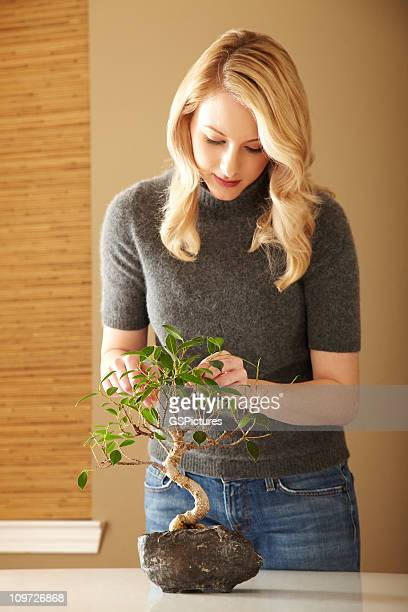 attractive blond woman tending a bonsai tree - bonsai tree stock pictures, royalty-free photos & images