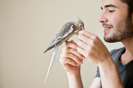 Attractive man playing with his parrot indoors 510205501