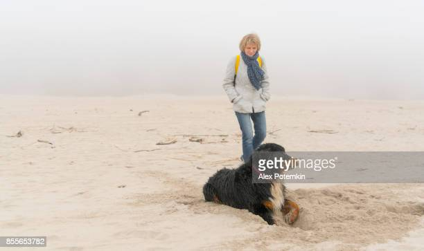 attractive mature woman walking the dog щи the sandy beach of the baltic sea - alex potemkin or krakozawr stock pictures, royalty-free photos & images