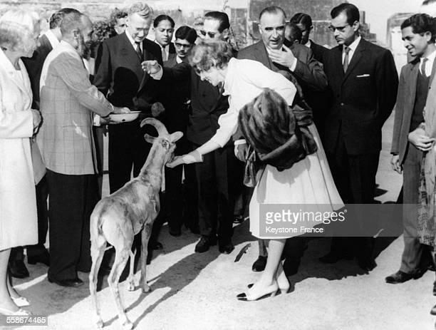 Au cours de la visite aux Jardins de Shalimar Madame Claude Pompidou donne a manger a une gazelle le 9 fevrier 1965 a Lahore Pakistan