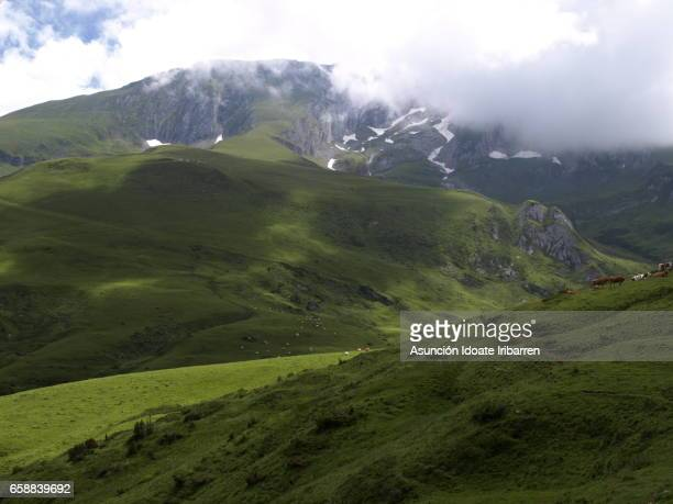 aubisque pass - arbusto stock pictures, royalty-free photos & images