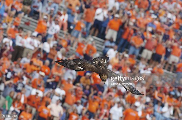 Auburn University's War Eagle VI gracefully soars onto the field before the home football game between the Auburn University Tigers and the...