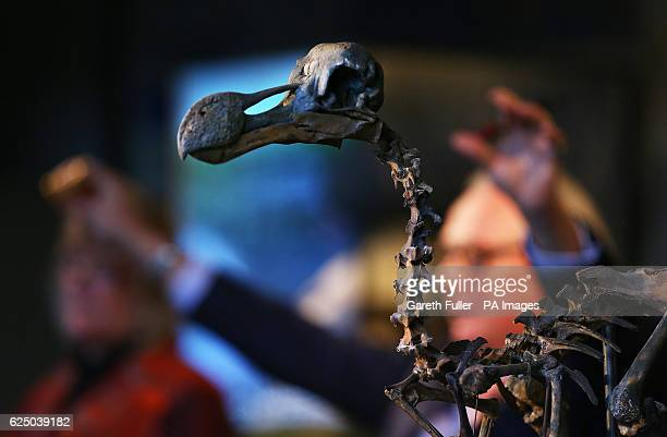 Auctioneer James Rylands sells a rare nearcomplete Dodo skeleton for a total of pound346300 at Summers Place Auctions in Billingshurst West Sussex