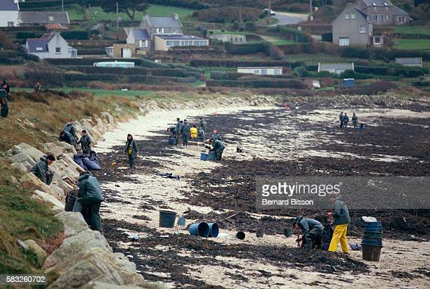 Audierne Bay in Brittany The Italian oil tanker Amazzone lost 3000 tons of crude oil due to an oil spill causing untold damage on marine and animal...