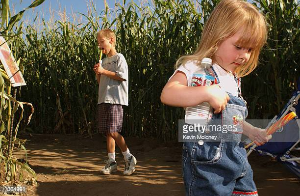 Audrey Heinz right and brother Mikel play at a 14acre corn maze September 2 2002 near LaSalle Colorado The eagleshaped maze created by farmer Glen...