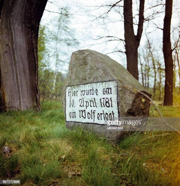 Auf einem Stein in einem Wald bei Senftenberg ist der Abschuß eines Wolfs im Jahr 1781 als besonderes Ereignis vermerkt, undatiertes Foto von 1981....