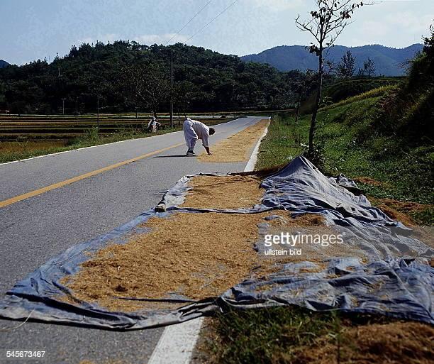 Auf einer Landstraße wird Reis zumTrocknen ausgelegt 1990