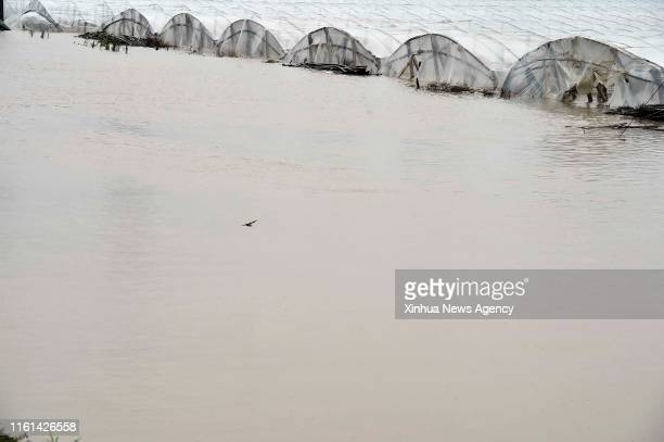SHOUGUANG Aug 12 2019 Vegetable greenhouses are flooded due to heavy rainstorms brought by typhoon Lekima in Jitai Town of Shouguang east China's...