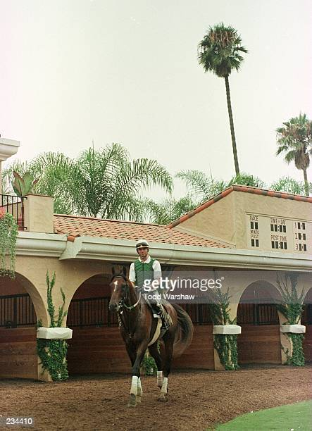 Exercise rider Gerard Guenther takes Cigar through the paddock area during a practice session prior to the Pacific Classic to be held Saturday August...